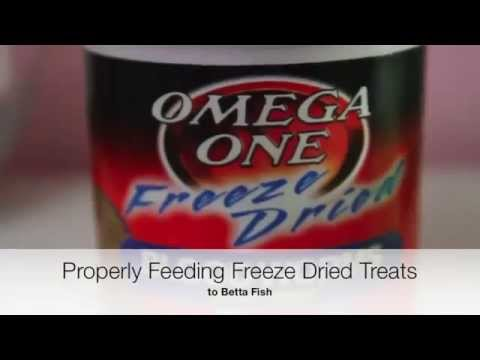 PROPERLY Prep Freeze Dried Bloodworms | Betta Fish