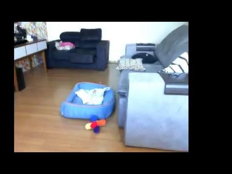 Cookie Live Stream