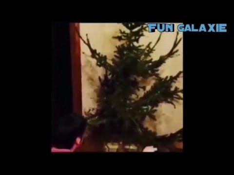 Weihnachten ist vorbei / Christmas is over