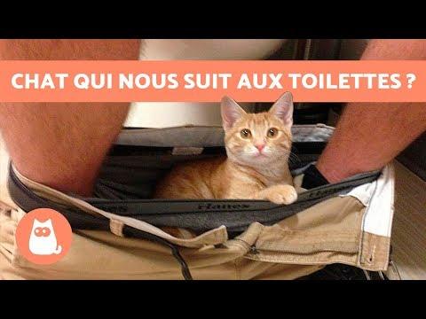Pourquoi mon chat me suit aux toilettes ?
