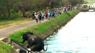 Poor by wealth, rich by heart! People saving an elephant from a canal water coaster