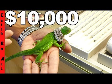 IGUANA Gets $10,000 DIAMONDS to Cure PET STRESS!