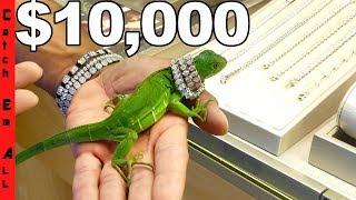 IGUANA Gets $10,000 DIAMONDS to Cure PET STRESS!
