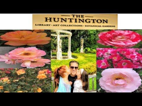 Huntington Rose Garden Tour PLUS Rose Care  | Planting  | Pruning  | Feeding