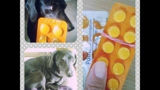 Jak podawać psu tabletkę? 3 szybkie i skuteczne sposoby.