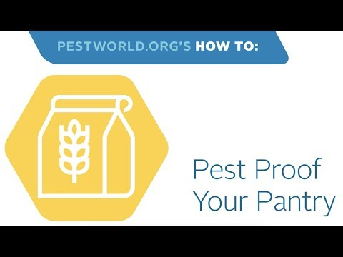 How to Pest Proof a Pantry