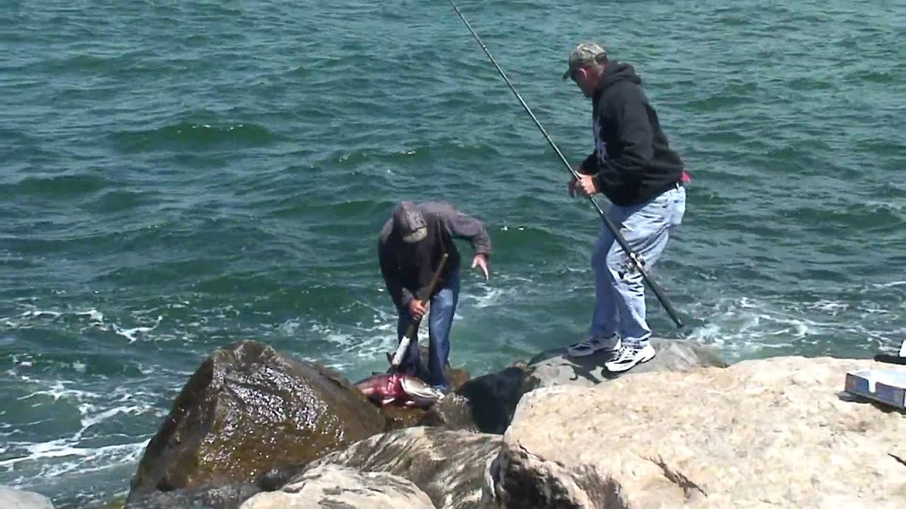 Image gallery jetty fishing for Jetty fishing oregon