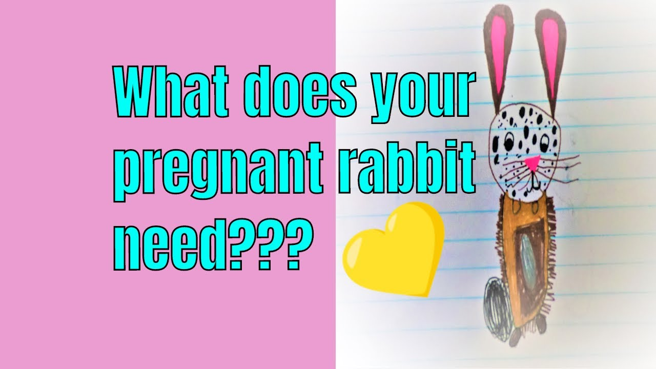 What does a pregnant rabbit need?