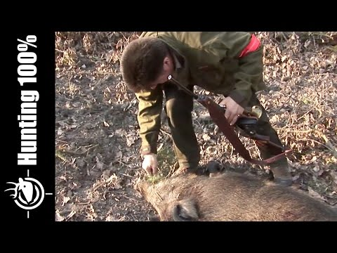 Deer and Wild Boar Hunting in France
