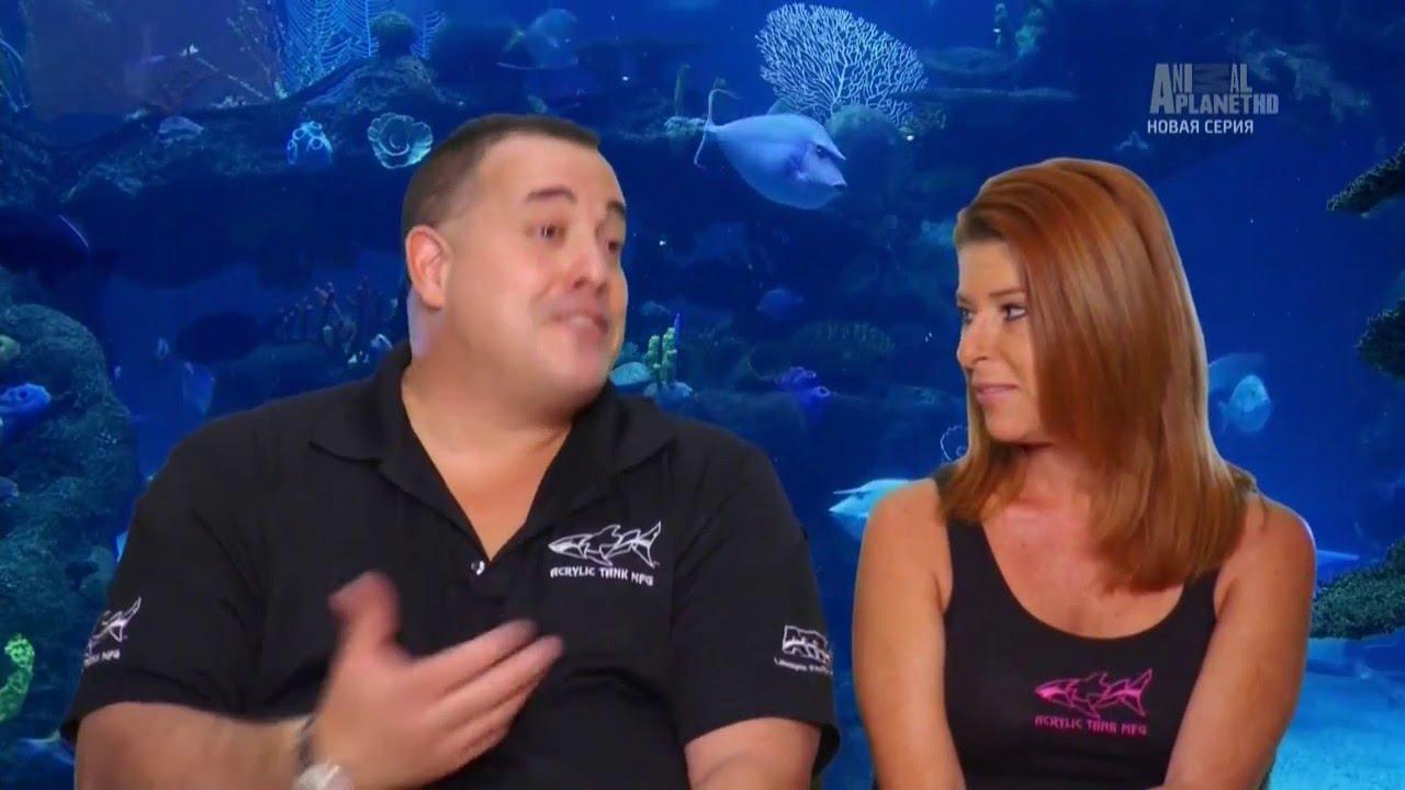 дому аквариумный бизнес 1 серия особенности захватов