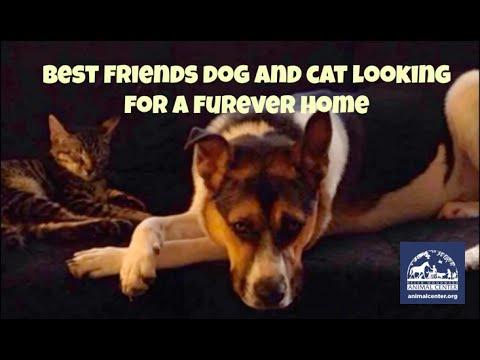 Dog and Cat Friends Reunited