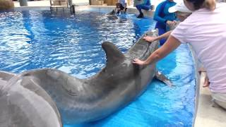 Petting & Feeding Dolphins