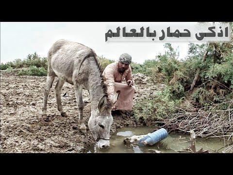 الفلم العراقي الحمار المثقف