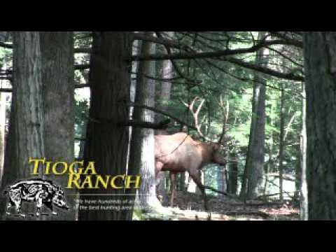 Guided Elk Hunts In PA - 330