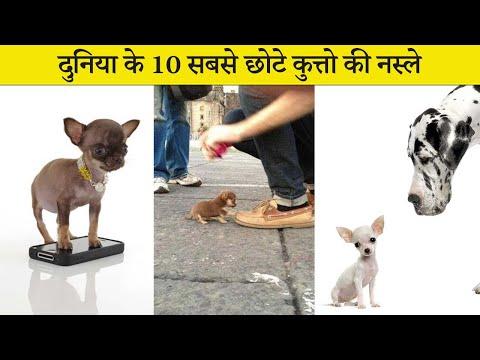 दुनिया की 10 सबसे छोटे कुत्तो की नस्ल Top 10 SMALLEST DOG BREEDS in Hindi