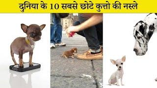 the most smallest dog in the world