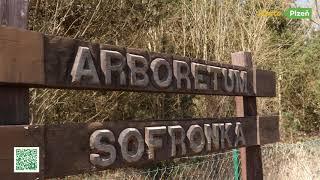 Plzní po stezkách - Naučné stezky v arboretu Sofronka - Naučná stezka v borovicích