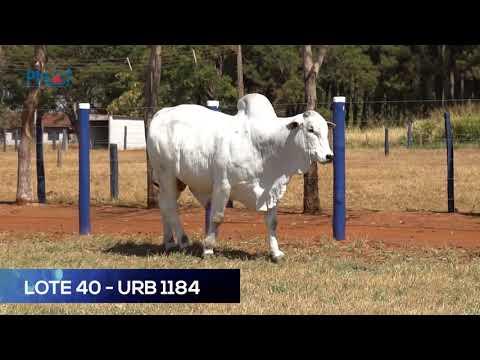LOTE 40 - URB1184 - NELORE