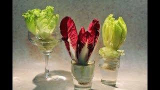 ecco perchè non dovete mai buttare gli scarti della verdura, insalata a costo zero dagli scarti