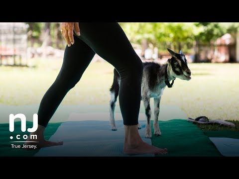 Goat yoga comes to the Garden State