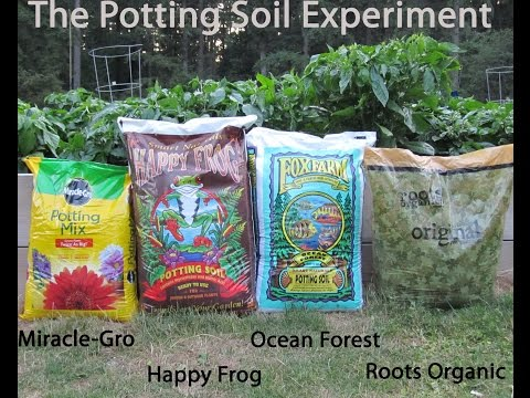 Ocean Forest vs. Roots vs. Miracle Grow vs. Happy Frog : Potting Soil Experiment