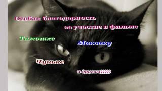 Тёплые коты.mpg