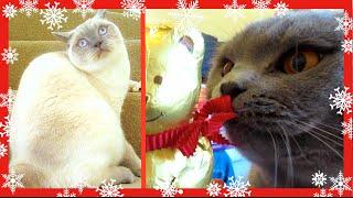 CHRISTMAS EVE! | VLOGMAS DAY 24