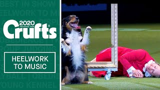 Heelwork To Music  Freestyle International Winner at Crufts 2020