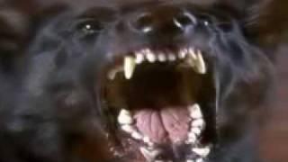 DJ Aligator  woof like a dog rmx by rufayseby