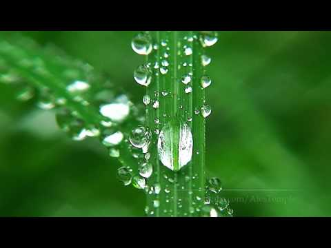 HD Nature - Relaxation Video - Macro