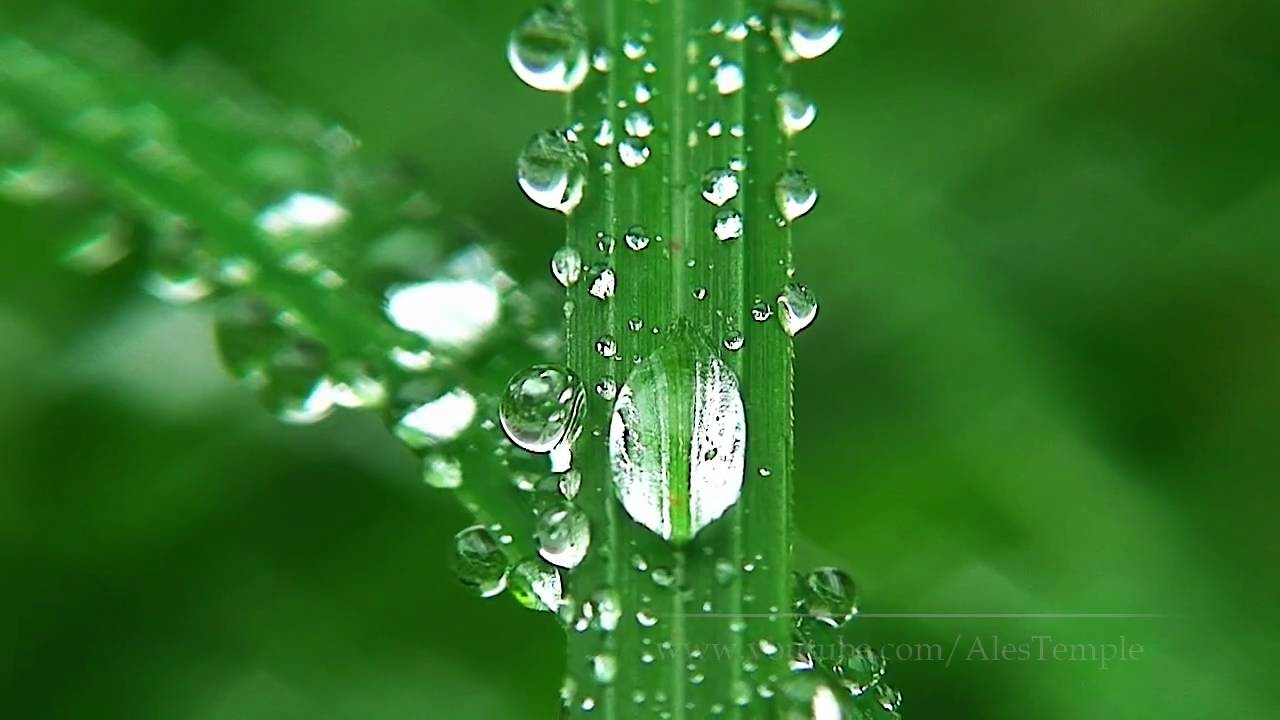 hd nature - relaxation video - macro - youtube