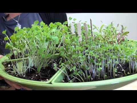 Health & Wellness at Creative World of Montessori