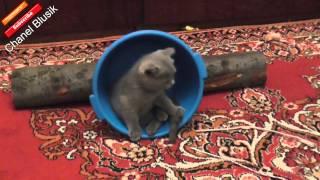 приколы про кошек   ★  Кот  Юмор  ★   Приколы с Животными