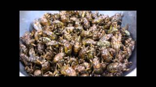 セミの幼虫のフライがとても美味しいです。 セミの成虫の素揚げに注射器...