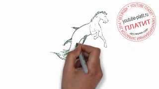 Как быстро нарисовать карандашом коня русалку за 36 секунд