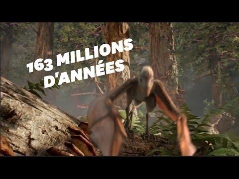 Un dinosaure chauve-souris découvert en Chine