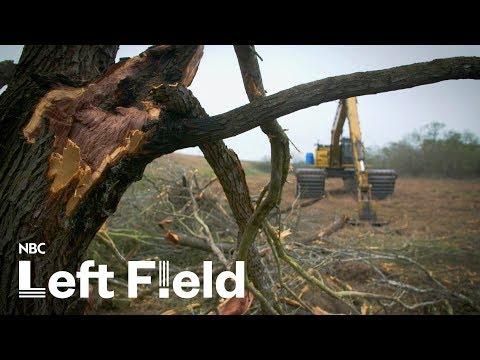 Mexico Border Wall Threatens Wildlife Habitat | NBC Left Field