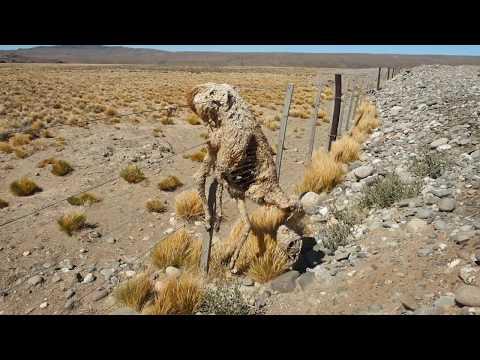 Argentinien Backpacker - Die Doku mit vielen Highlights bis Feuerland - by XIPIfilms