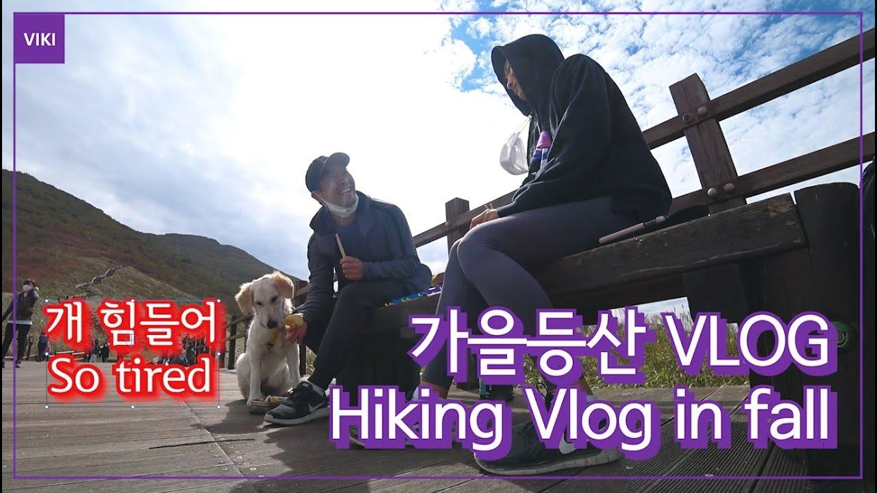 Eng) 경상도 가족 가을등산 브이로그(ft.간월재) l Korean Family's Hiking Vlog in Fall(ft. Korean mountain) [VIKI]