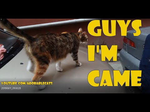 Kitten Squad in The Car - Baby kittens /cute kittens/kitten videos 😻