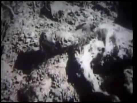 JASENOVAC (1945), documentary film