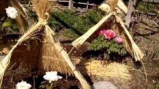 2010年1月18日福岡市東区筥崎宮花苑で撮影した映像です。