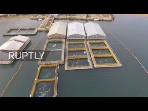 Russia: Drone captures 'whale prison' in Nakhodka Bay
