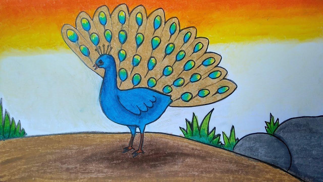 Menggambar Burung Merak Cara Menggambar Dan Mewarnai Untuk Pemula