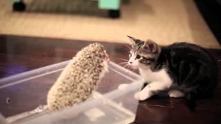 Ежик и котенок