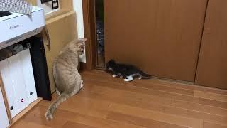 ほのぼのとするひのきと2匹の子猫たち