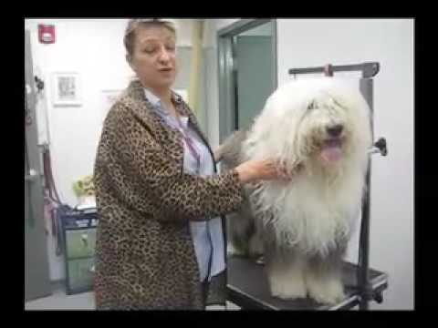 Linda Kay Grooming Extreme Doggie Makeover Teddy