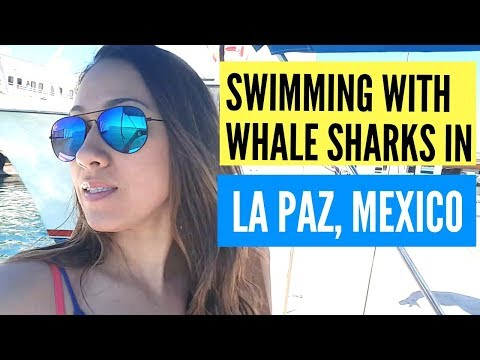 Swim With Whale Sharks tour La Paz Mexico - Just A Day Trip From Cabo San Lucas!