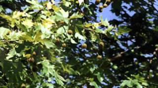 Moby - The Rain Falls And The Sky Shudders (Nik Key Light DnB Remix)