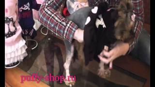 Костюм для собак Pinkaholic